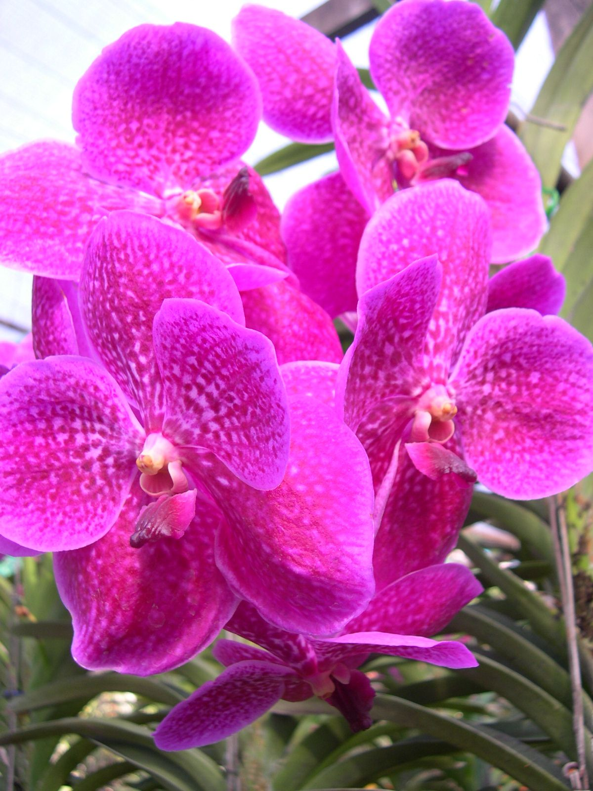 Pin on orchid