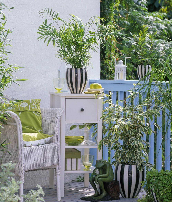Tipps Pflege Pflanzen Wintergarten: Preiswerte Wintergarten