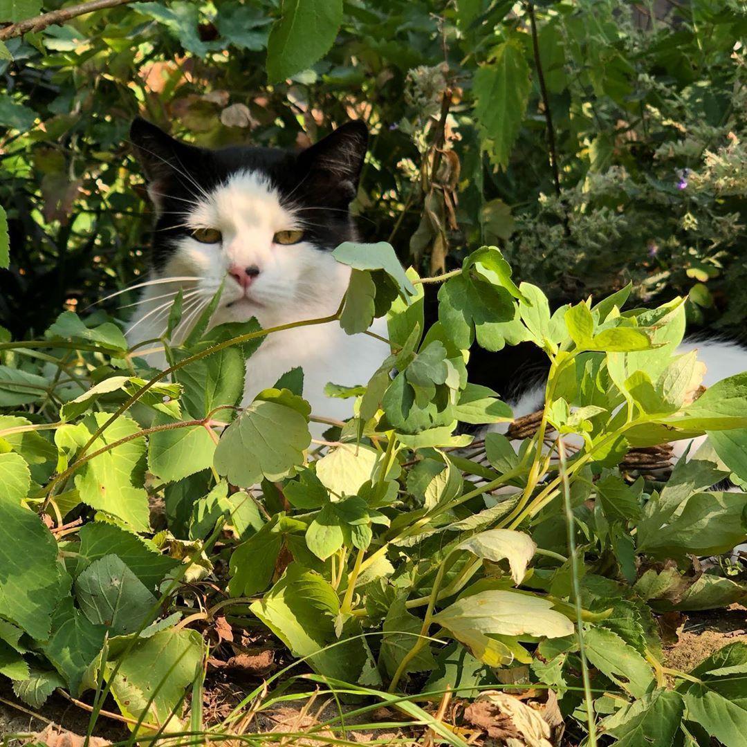 Ranger Cat In Voller Tarnung Nofilter Katze Cat Garten Pflanzen Stealth Cats Animals Unsecured Credit Cards