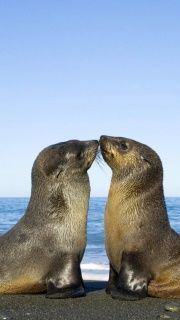 seals...they're just like us