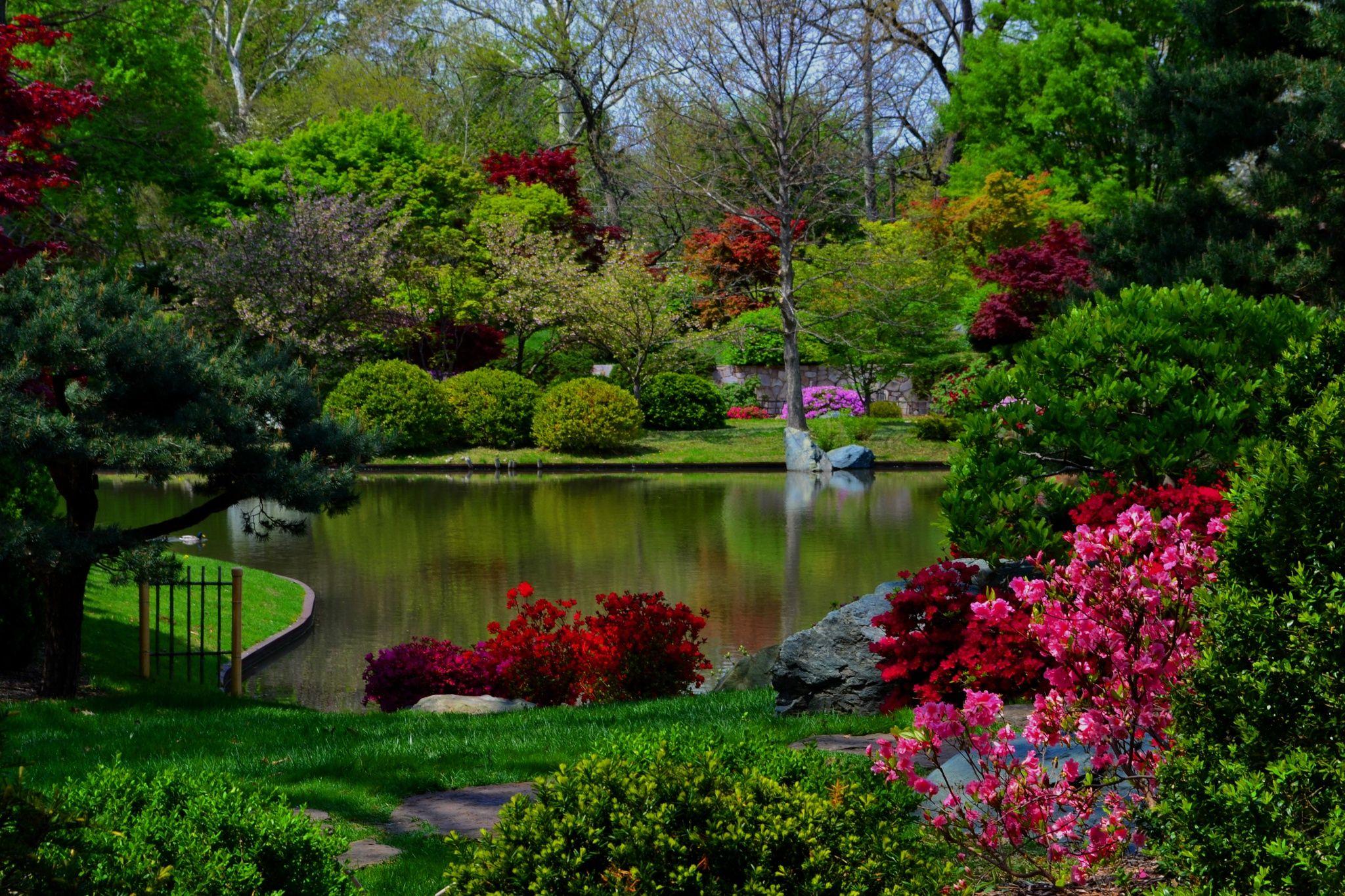 Photograph Spring Japanese Pond, Missouri Botanical Garden