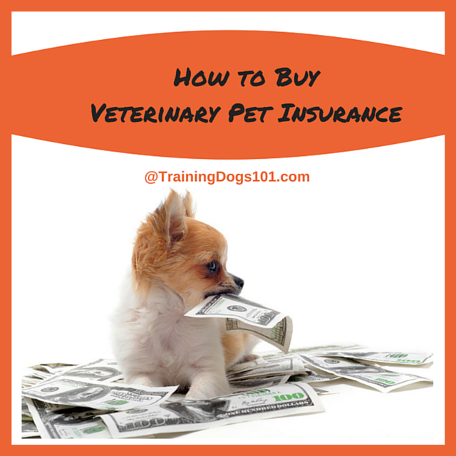 How To Buy Veterinary Pet Insurance Training Dogs Pet