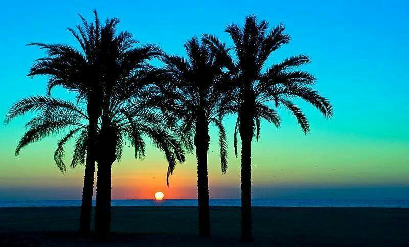 Love palmtrees