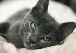 Nautiskeleva Kissa 0 80