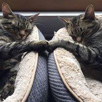 cat love ;-)