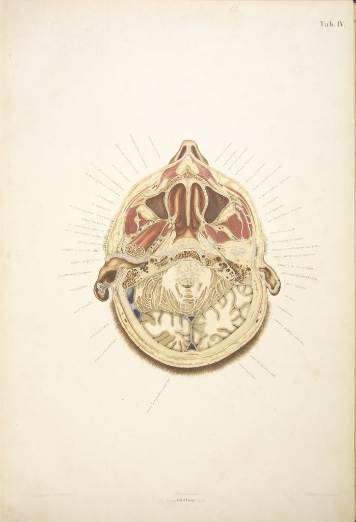 From the collection of anatomical drawings from the University of Leipzig in the late 19th century, via Bibliodyssey