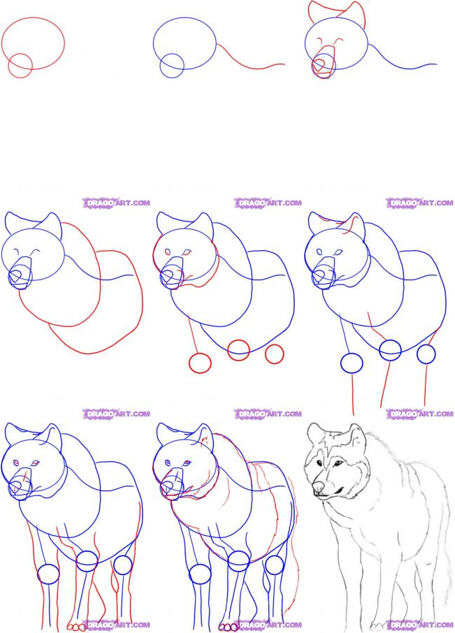 Step by step instructions on drawing a simple wolf howling at the moon description from