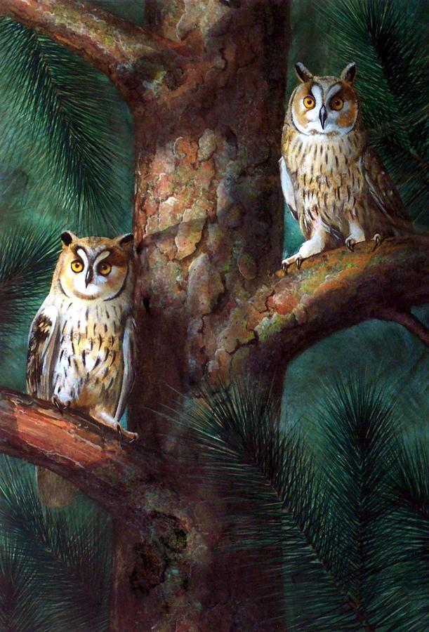 'Owls in Moonlight' by Frank Wilson