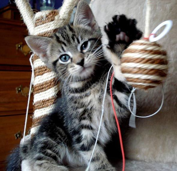 Tibi S First Litter 5 Kitten Kittens Kitty Litter
