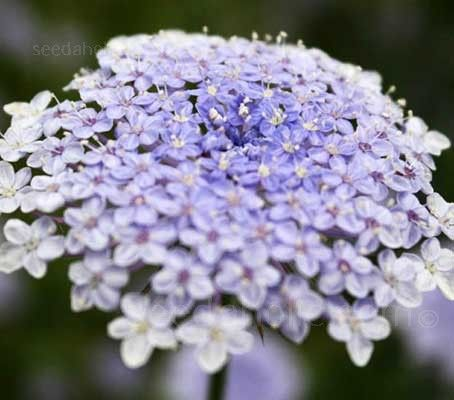 Pin On Flower Seeds