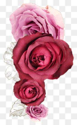 Rosas Rojas Imagenes Png Sin Fondo Fondos De Rosas Rojas Imagenes De Fondo