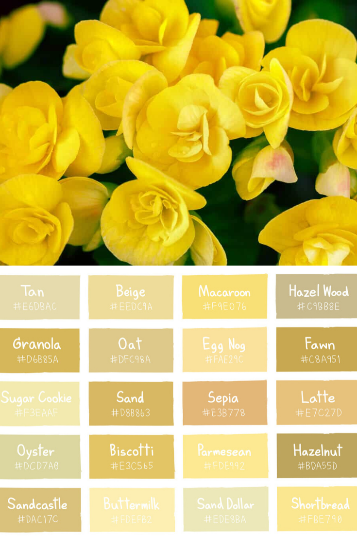 30 Types Of Yellow Flowers A To Z Photos And Info In 2020 Yellow Flowers Flowers Shades Of Yellow
