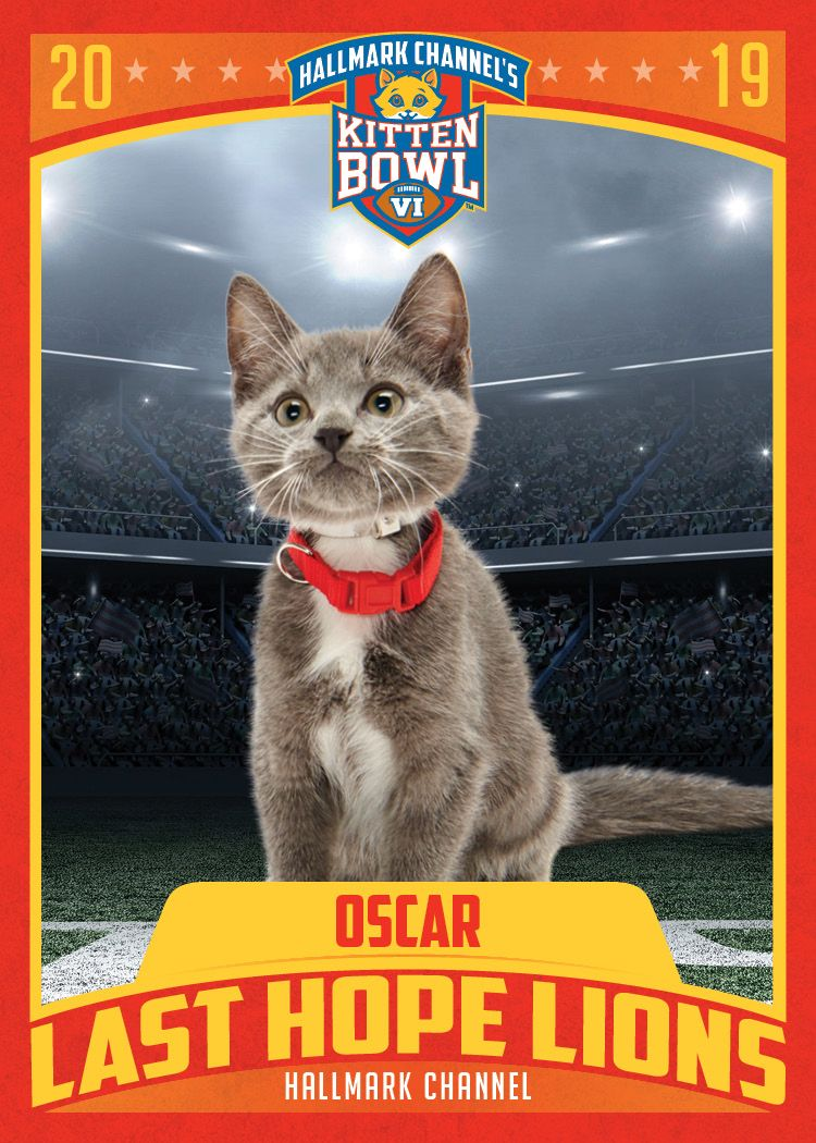 Tune In For Kitten Bowl Vi And See If The Last Hope Lions Oscar Will Take The Mvk Most Valuable Kitten Award This Year Kitten Bowls Kitten Hallmark Channel