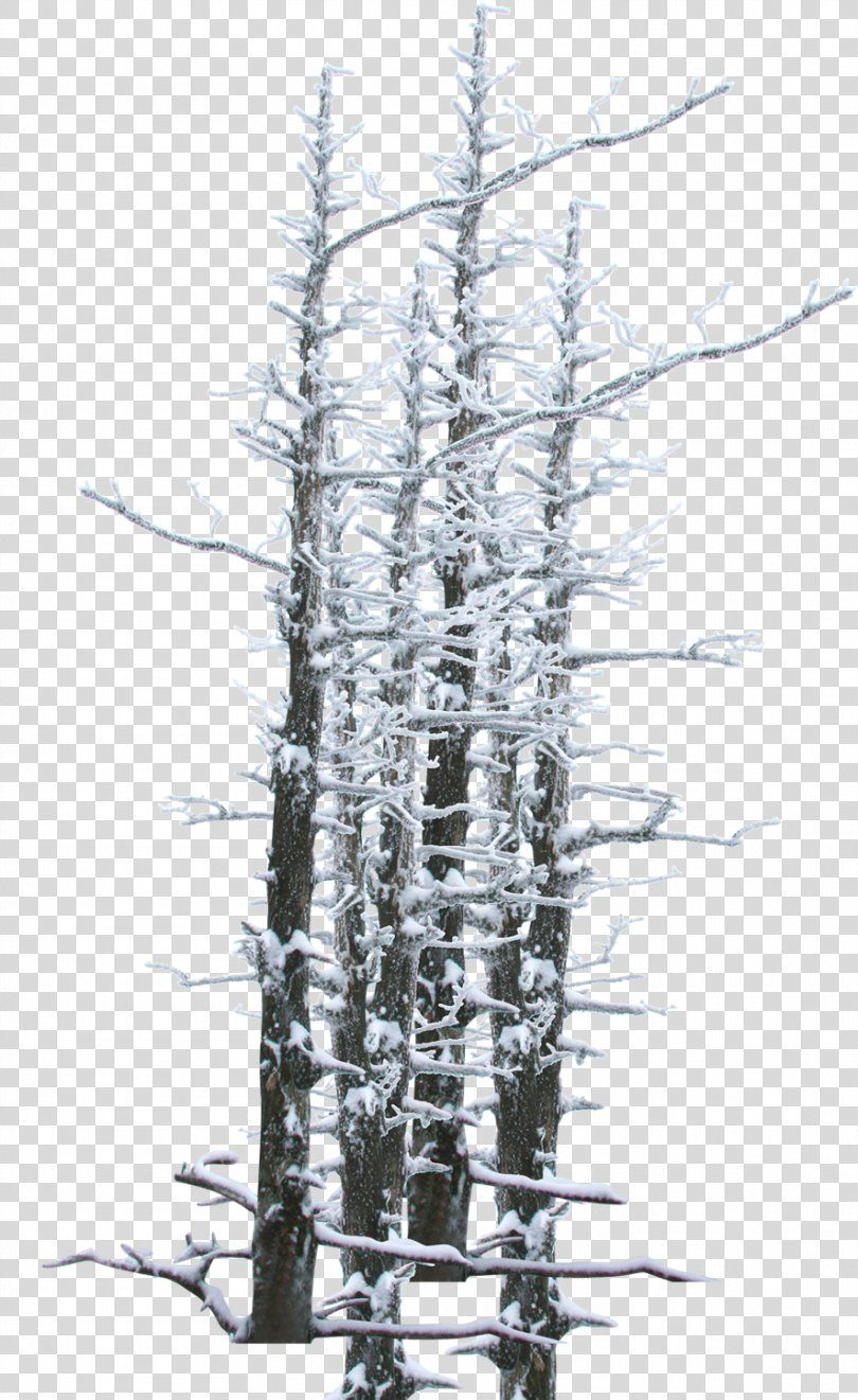 Winter Snow Tree Twig Winter Snow Branches Theme Poster Png Winter Black And White Branch Hard Rime Paintshop Pro Snow Tree Winter Snow Snow