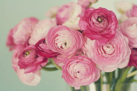 Pink Ranunculus Photograph Flower Bouquet Still Life by Kristybee