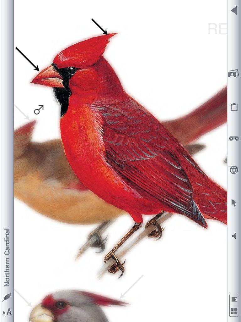 Peterson Field Guides - Backyard Birds   Birds, Backyard ...