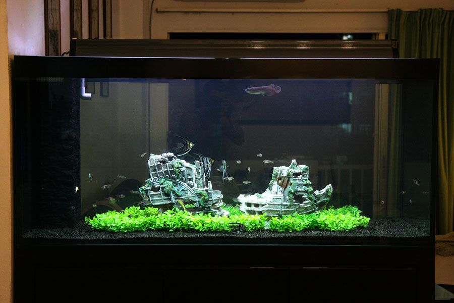 Look For Hidden Treasure With Sunken Ship Aquascapes Cool Fish