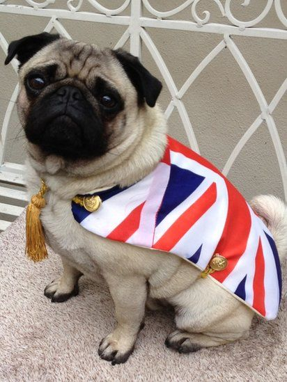 Diamond jubilee your pictures pugs and yet more pugs pinterest pug dog wearing a union jack flag in honor of the diamond jubilee of queen elizabeth ii photo robert buxton 2012 thecheapjerseys Choice Image
