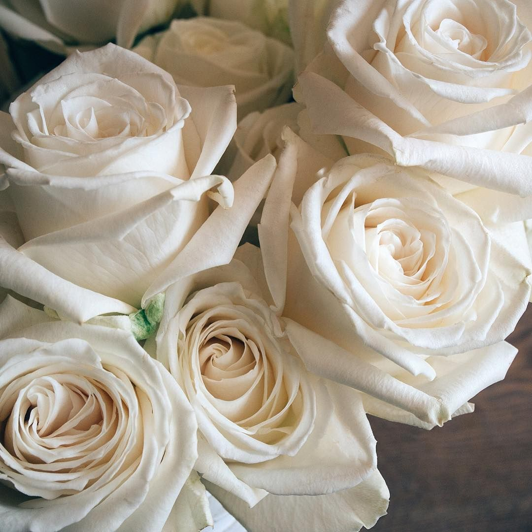 Gardens · Gorgeous Playa Blanca. One Of Our Fair Trade Certified White Roses  Perfect For The