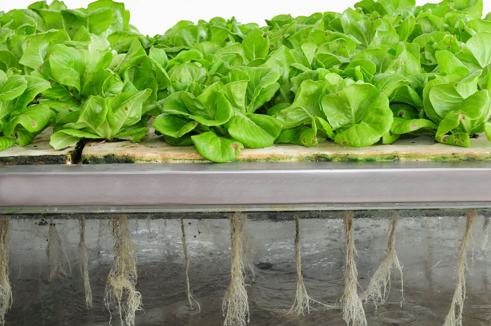 Hydroponic Gardening How To Grow Without Soil