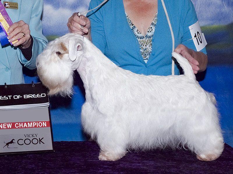 Image result for sealyham terrier   sealyham terrier   Pinterest ...