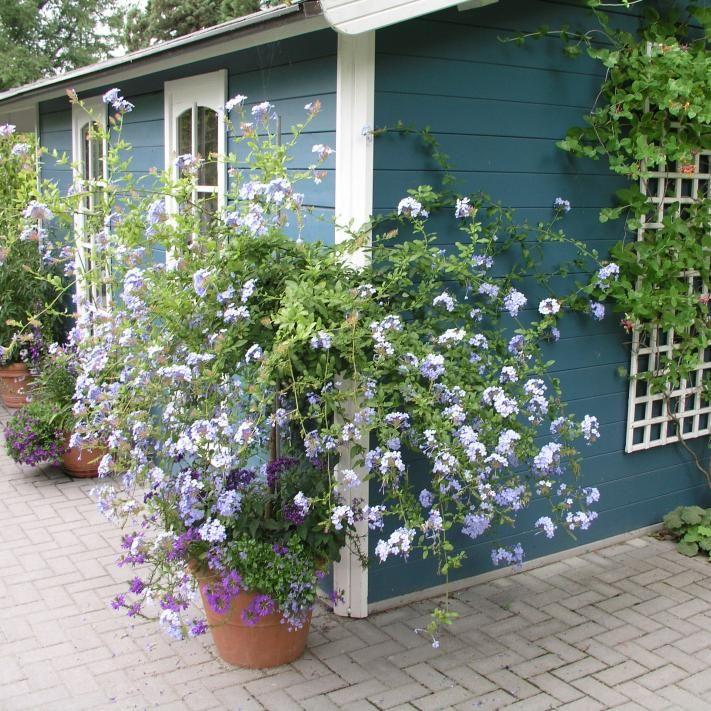 Gartenhaus Gartenhaus