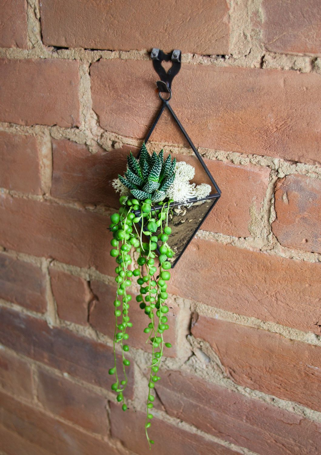 Wall hanging terrarium kit a gorgeous glass and copper geometric