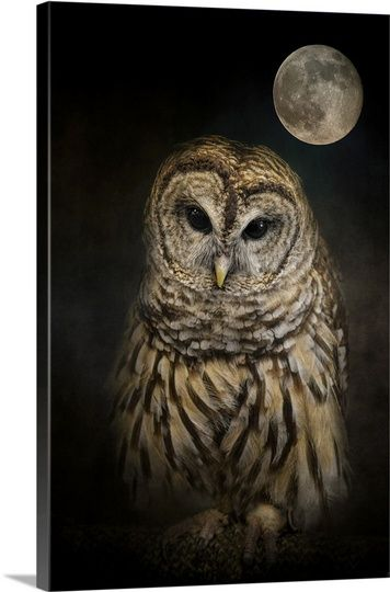 Barred Owl And The Moon Wall Art Canvas Prints Framed Prints Wall Peels Moon Art Print Barred Owl Moon Wall Art