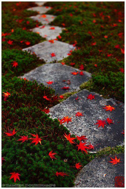 path through moss from single stones - Ōbai-in (黄梅院)