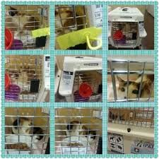 Pet Export Pet Relocation Pet Movers Pets