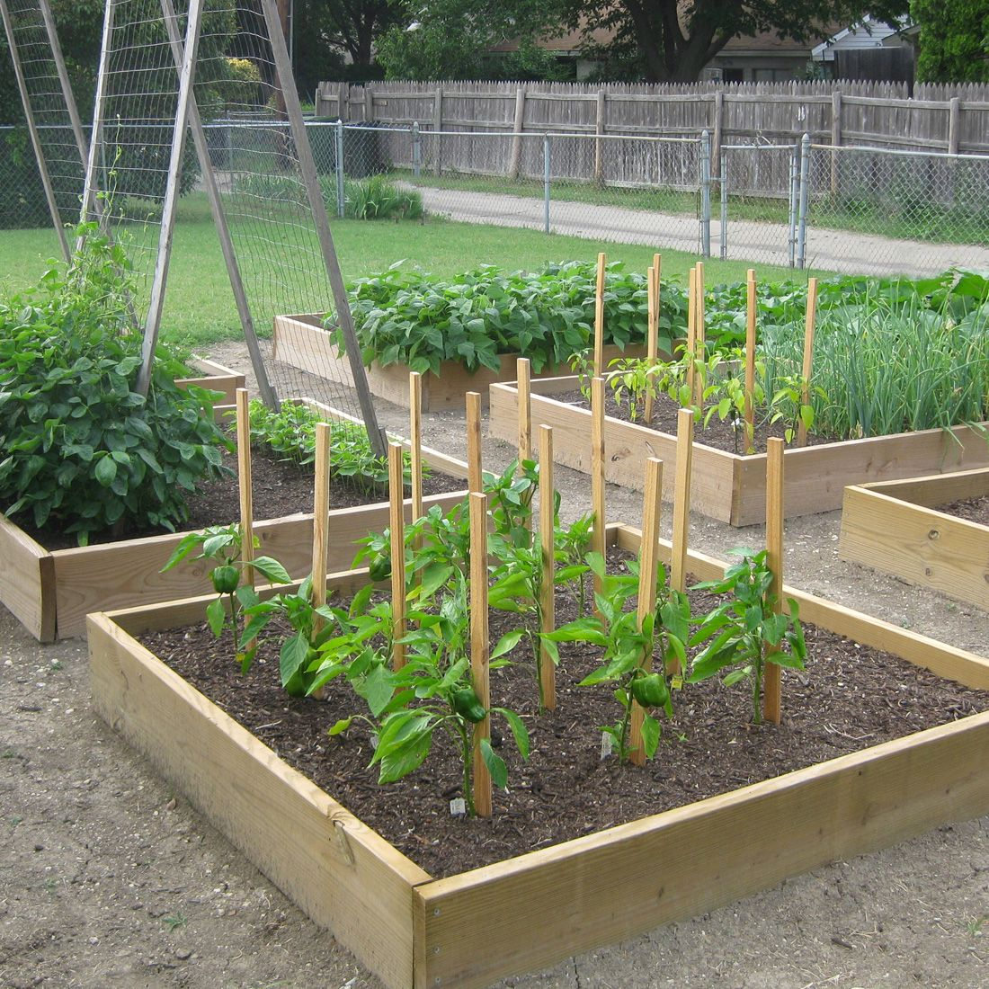Simple Vegetable Garden Ideas Part - 22: Interior, : Fantastic Vegetable Gardening For Backyard Decoration With  Shade Garden Plan Along With Silver Metal Garden Fence And Square Oak Wood  Garden Bed