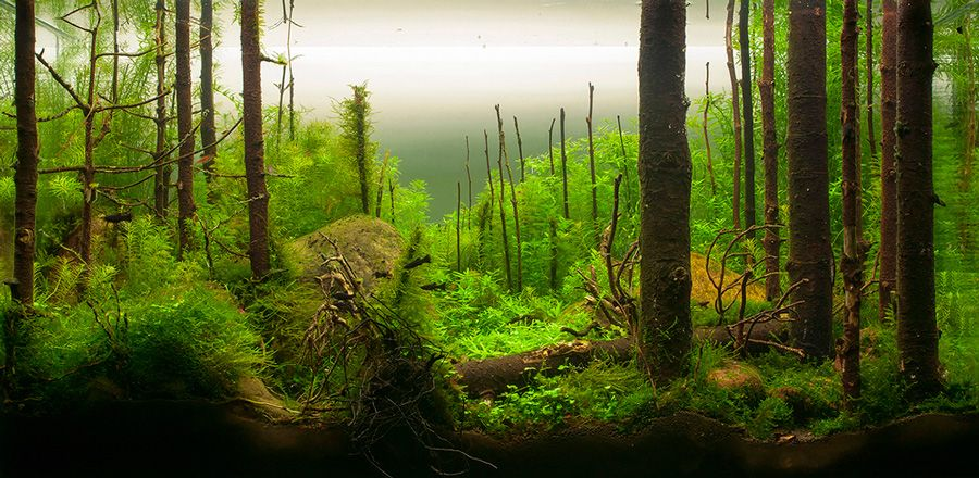 Captivating Aquascapes: The Art Of Creating Delicate Underwater Gardens
