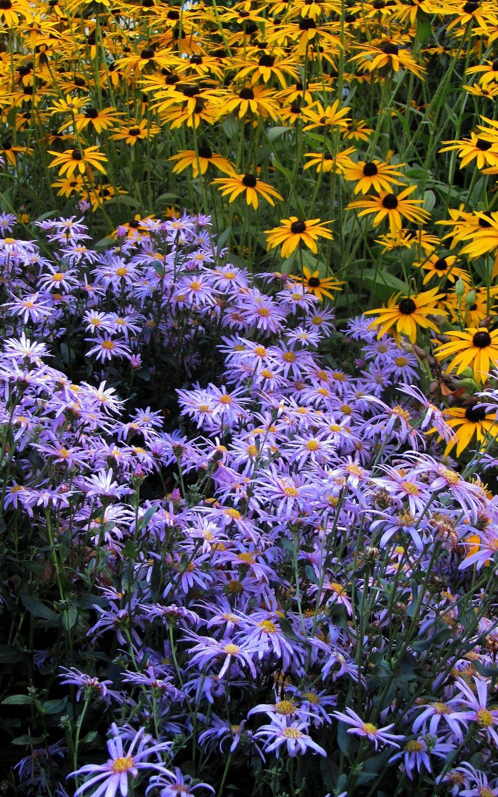 Visiting The Picton Garden Picton, Garden, Plants