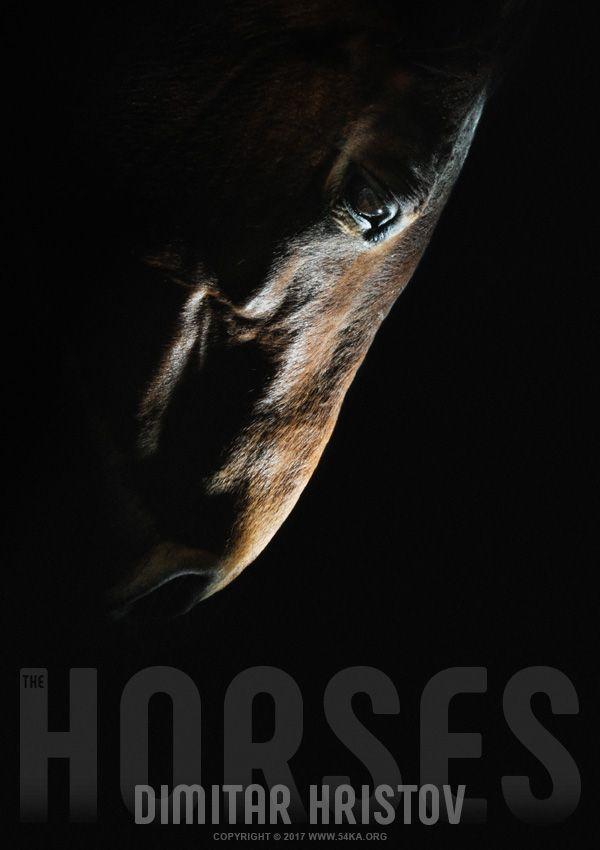 Photo of Horse head – strobist art portrait