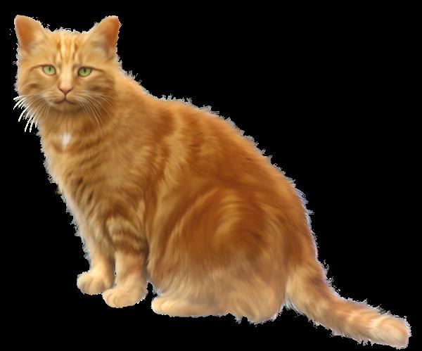 Orange Cat Transparent Png Clipart Orange Cat Cats Cat Aesthetic
