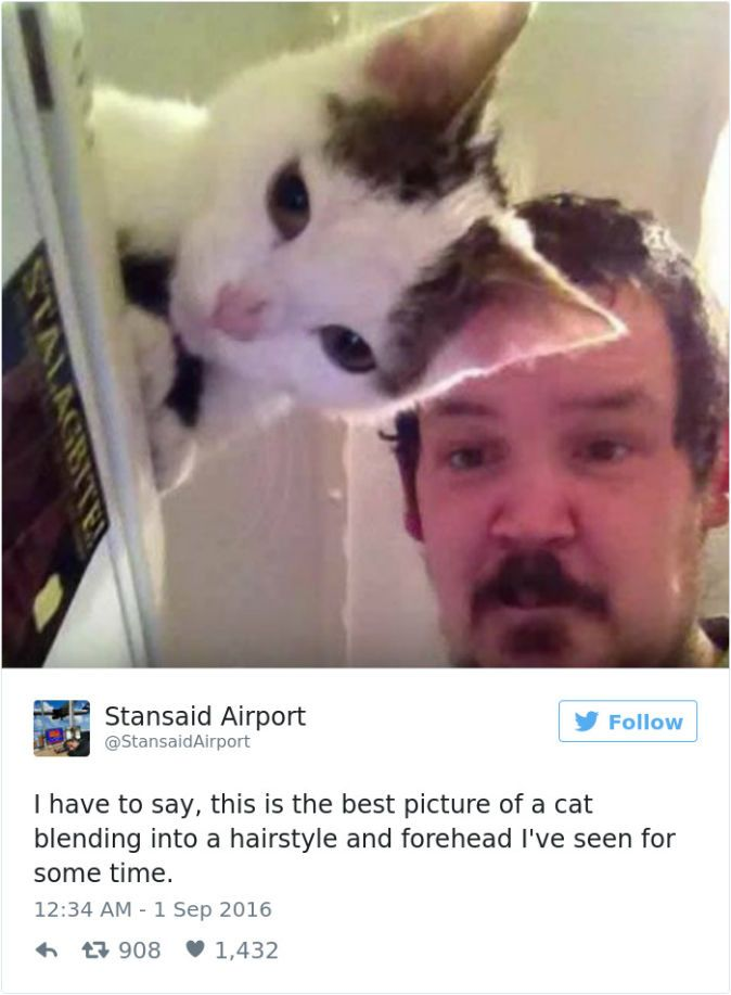 The Funniest Tweets About Cats In BlazePress Jajajjaja - The 27 funniest tweets about cats in 2016