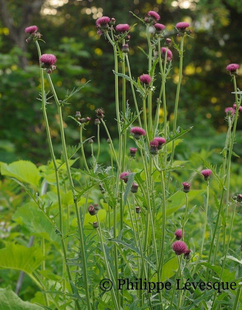 DSC_4436 Prairie garden, Blue clematis, Garden