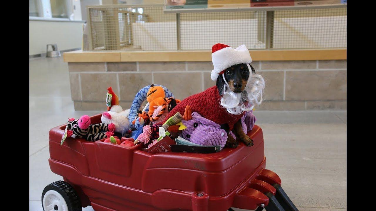 Santa Crusoe Visits Humane Society - YouTube
