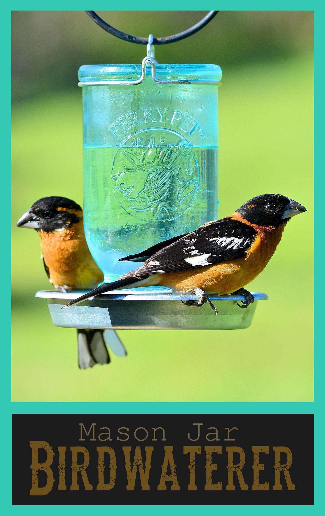 Mason Jar Bird Waterer Affiliate Mason Jars Bird House Feeder Diy Garden Projects
