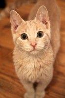 Tucker. I want him. :)
