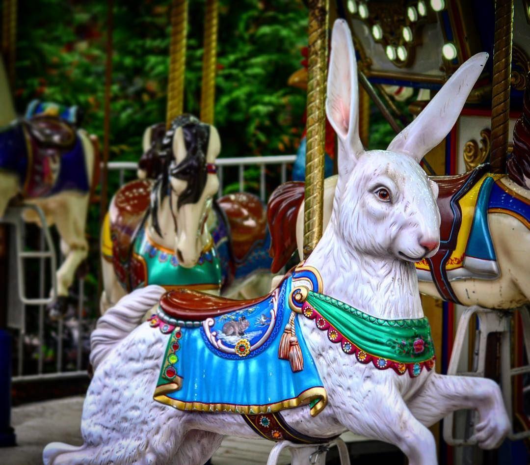 Surprised By The Creepyrabbit On The Zoo Carousel Rabbit Merrygoround Oregonzoo Kidsfun Traveladventures Portla Carousel Merry Go Round Tole Painting