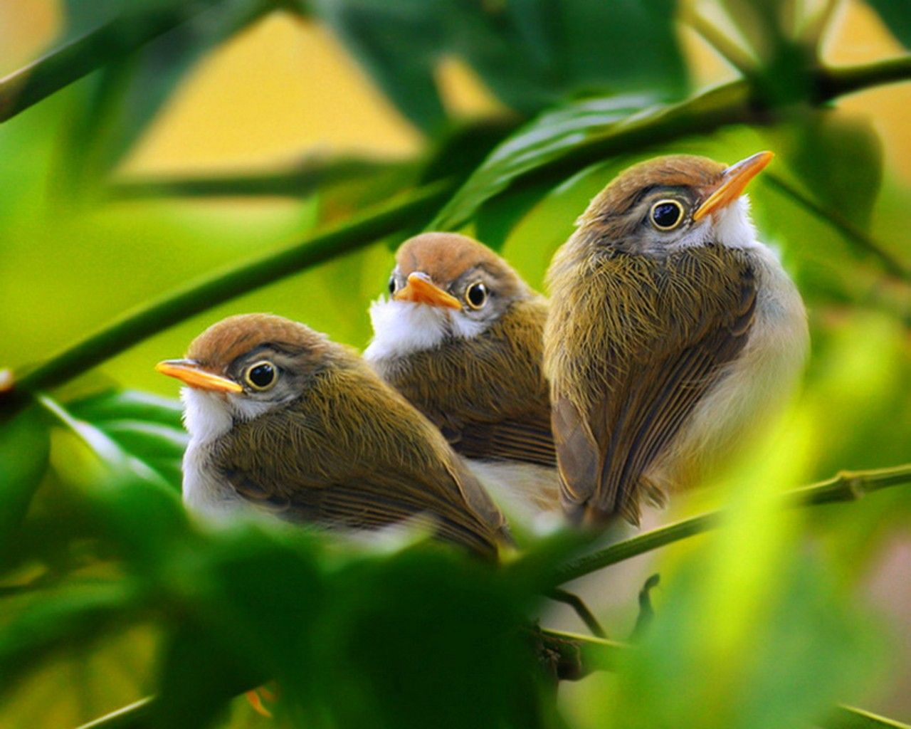 baby birds Green White Birds Leaves Brown Branches Baby