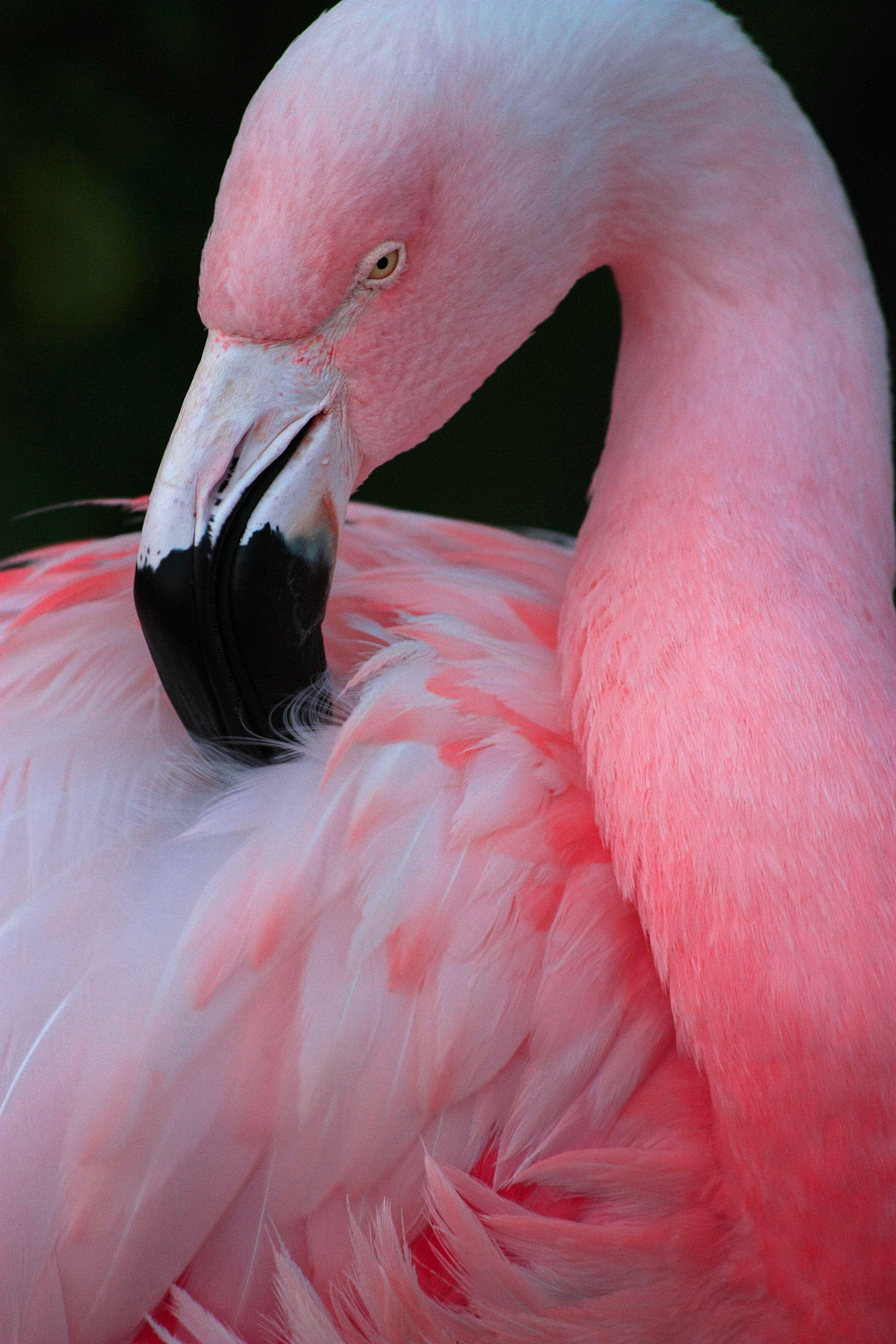 поднялся картинки с розовыми фламинго она тайком сбегала