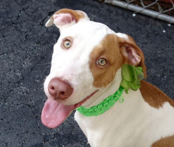 Safe 9 24 2015 By Second Chance Rescue Manhattan