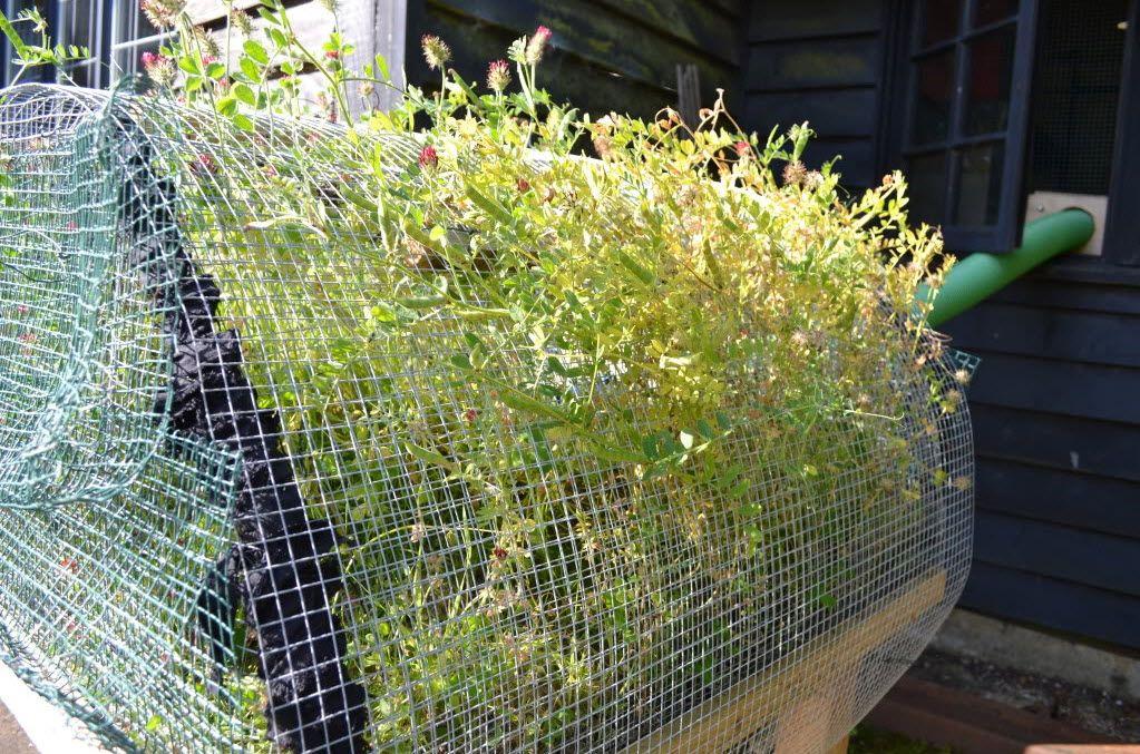 DIY Outdoor Hamster Garden Hamster