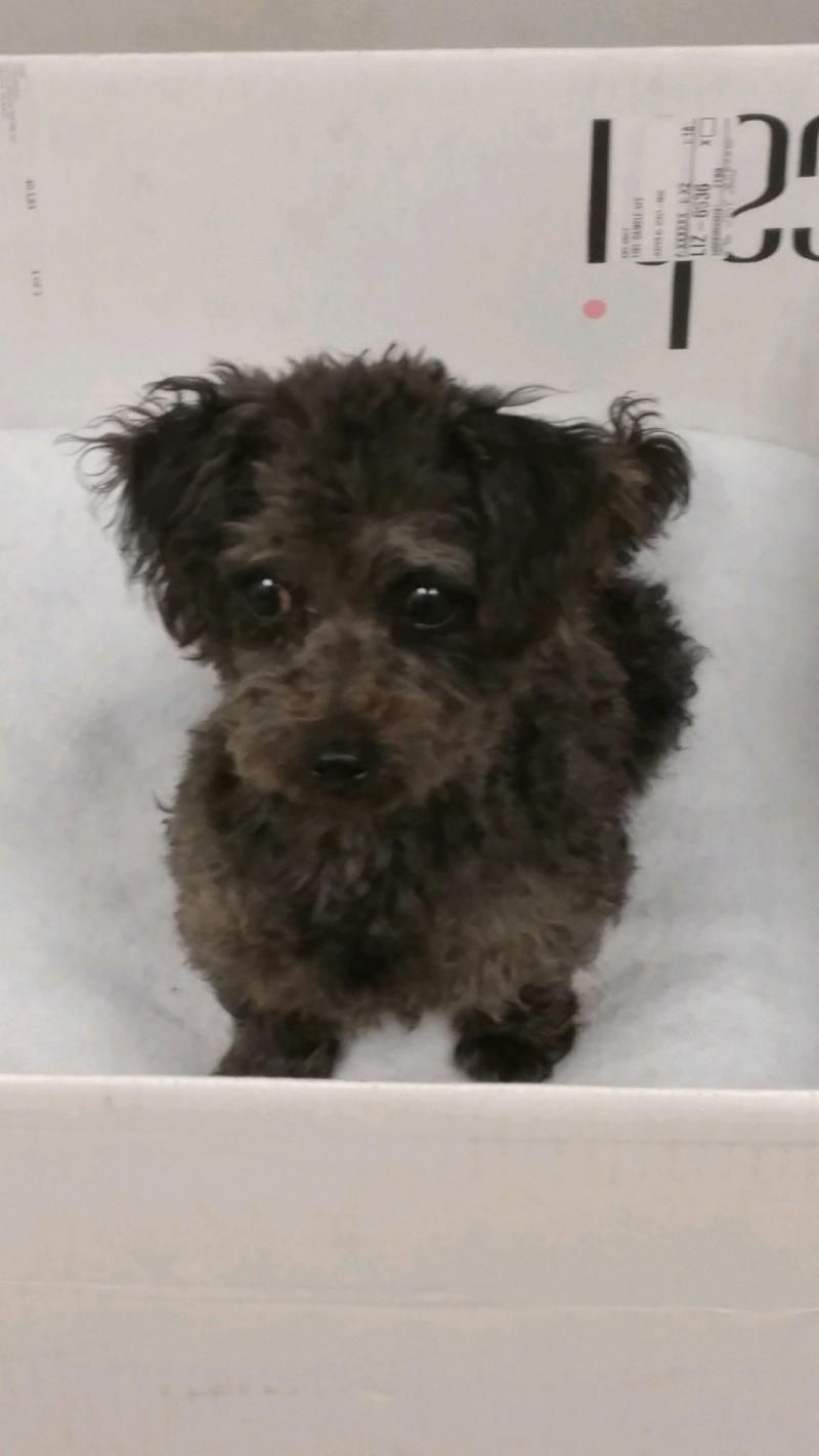 Puppies for rescue in wisconsin