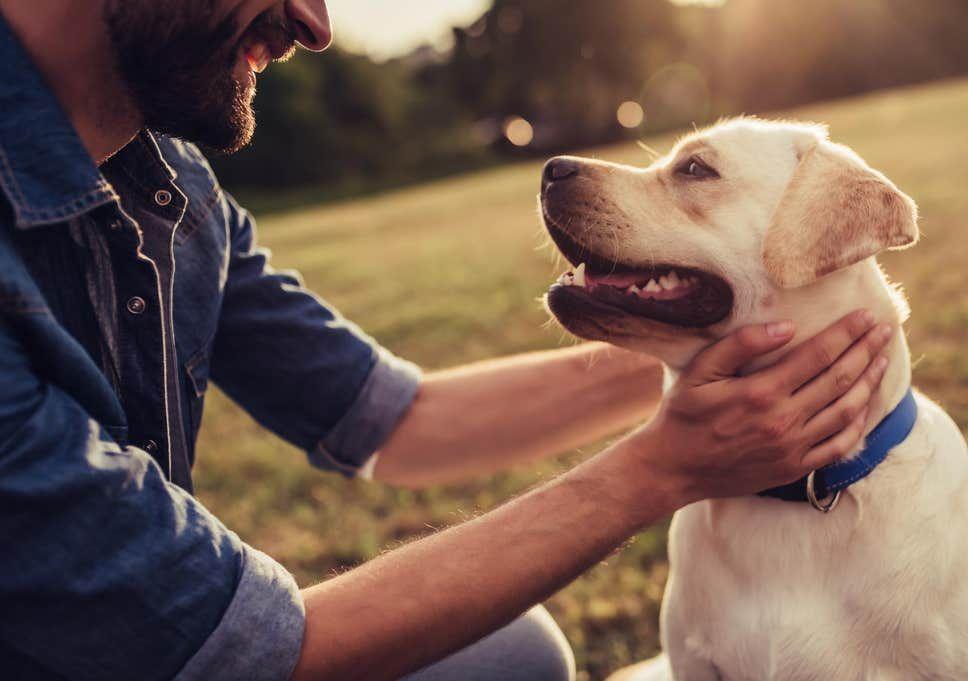 كيف تؤدي تربية الكلاب إلى إطالة العمر Popular Dog Breeds Most Popular Dog Breeds Dog Friends