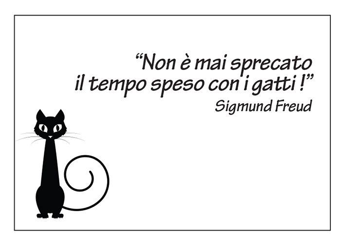 #cat #gatti