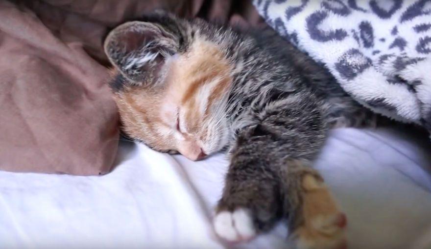 Little Maci The 6 Weeks Old Kitten Who Survived The Life Threatening Disease Kitten Cats And Kittens Kitty