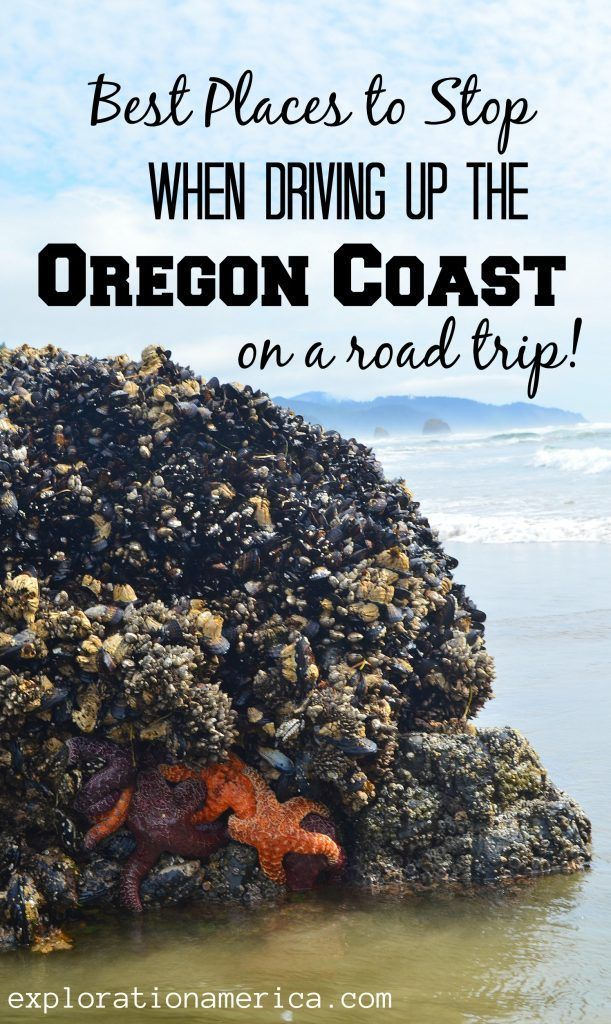 Best Places to Stop when Driving Up the Oregon Coast on a Road Trip #favoriteplaces